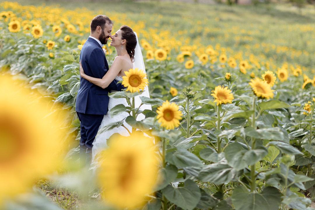 Girasoli Monferrato Luca Vieri fotografo Matrimoni