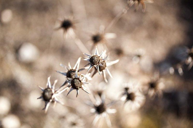 Flowers Formentera