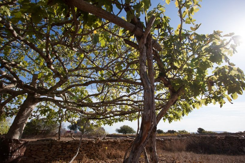 Countryside Formentera
