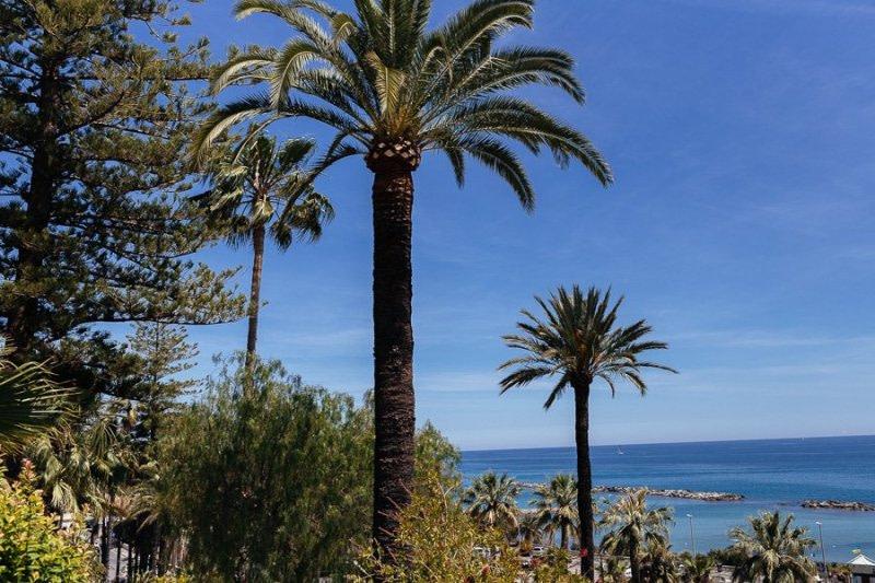 Palme di Sanremo Riviera Ligure