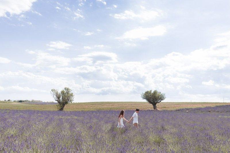 Lavanda Plateau di Valensole Luca Vieri Fotografo Matrimonio in Provenza
