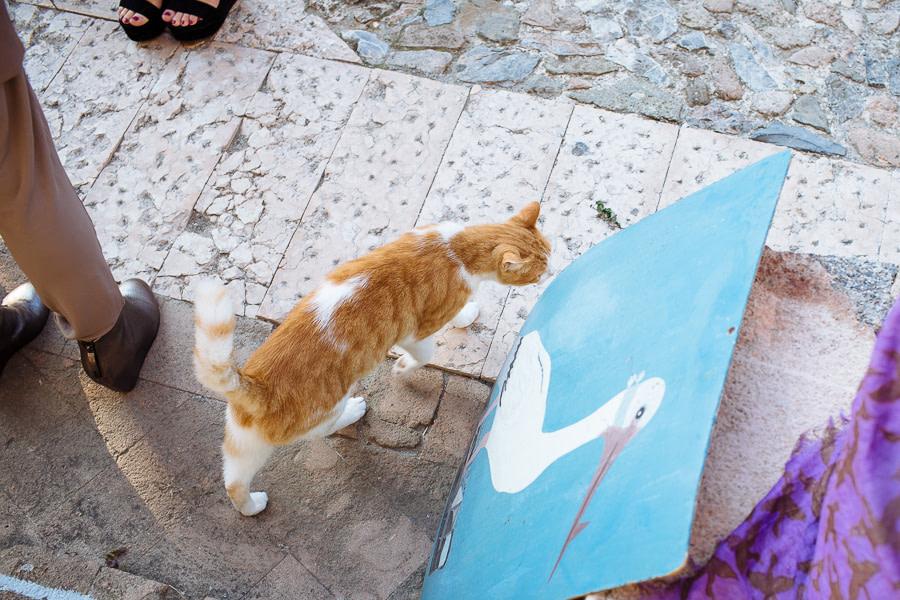 Gatti a Verezzi
