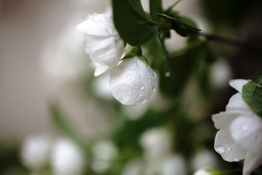 Wedding Flowers Matera